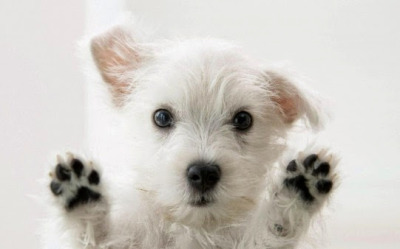Two paws up!