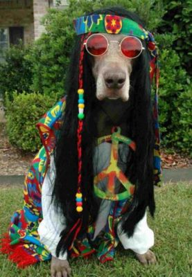 woodstock-dog