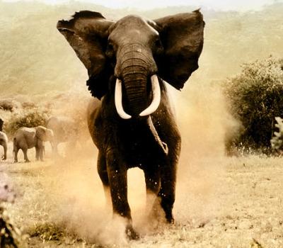 10 Reasons Why Elephants Are Just Like People Animal Fair