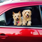 Holiday Safe Travel Tips For You And Your Pet!