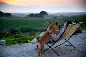 Pet-Friendly-Vacations-e1367817378204