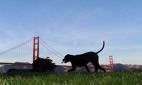 Earthquake In Northern San Francisco – Protect Your Pets!
