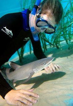 swim w baby shark