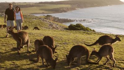 Kangaroo-Island-XHWOHLCSTDFC_16_thumbnail