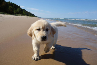 puppy-at-the-beach