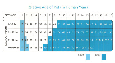 How old is your dog really?