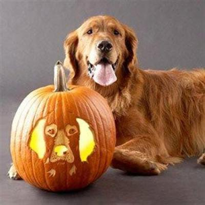 dog-pumpkin-12