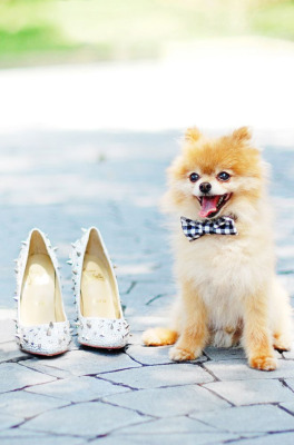 black-and-white-bow-tie-for-wedding-dog