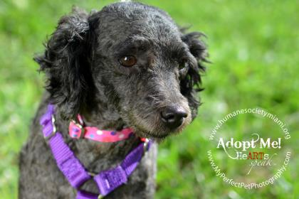 ADOPT ME! In Honor Of Black Friday – A Margarita Anyone?