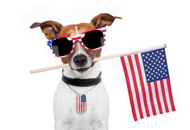 4th July dog
