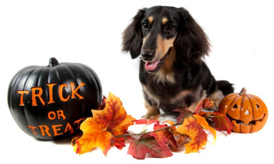 Dog at halloween