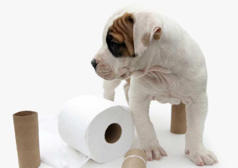 Dog poop cleaning