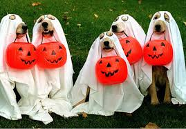 Dogs at Halloween