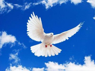Dove-doves-31209127-1024-768
