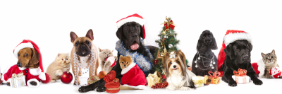 Cats and dogs at Christmas