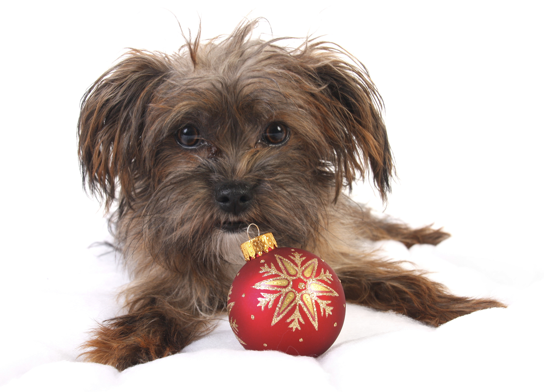 Christmas happy mutt