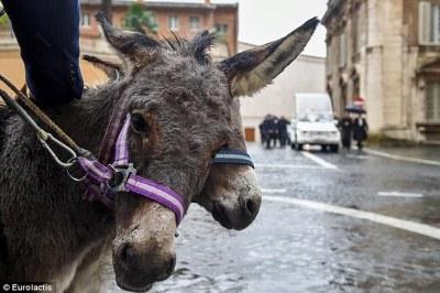 The Pope's donkeys