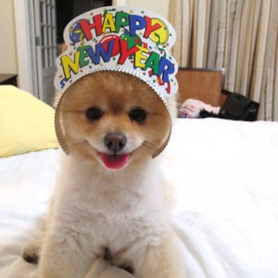 Sammy-Wishes-You-a-Happy-New-Years-e1325374412686