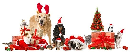 Holiday Tips – Finding the Purrfect Pet Sitter