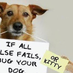 Why We Need Dogs In Our Lives!