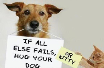 Hug-your-dog-or-cat