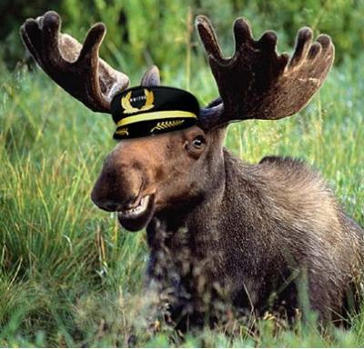 moose-on-a-plane