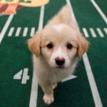 Puppy Love For Puppy Bowl XI!