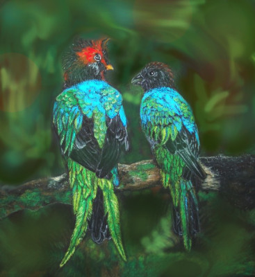 103030-quetzal_revised