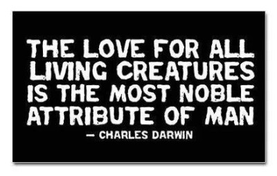 Charles-Darwin-The-love-for-all-living-creatures-is-the-most-noble-attribute-of-man