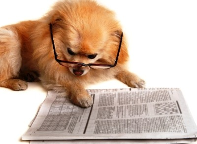 Dog-Reading-Paper