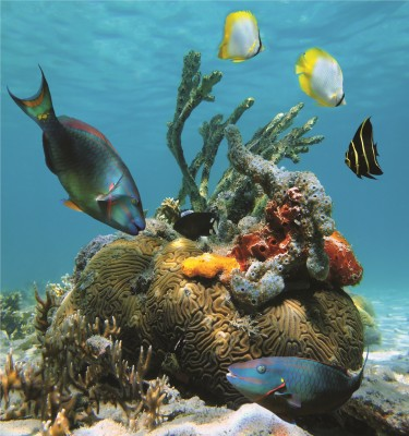 Saving fish and coral...