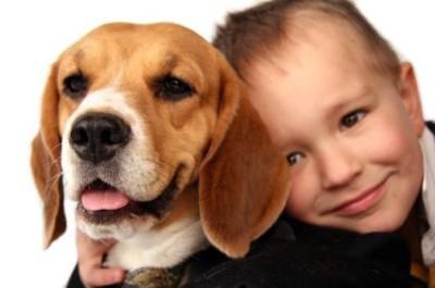 boy_beagle_0