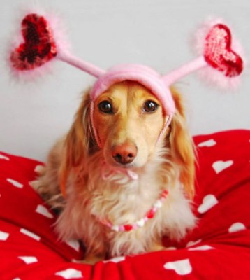 pretty-valentine-dog