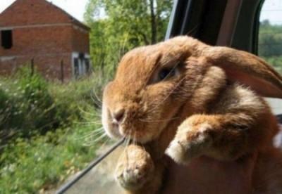 Bunny_Car_Ride