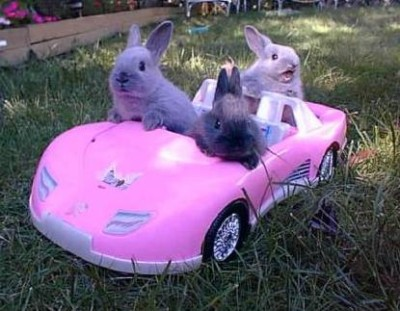 Bunny_car