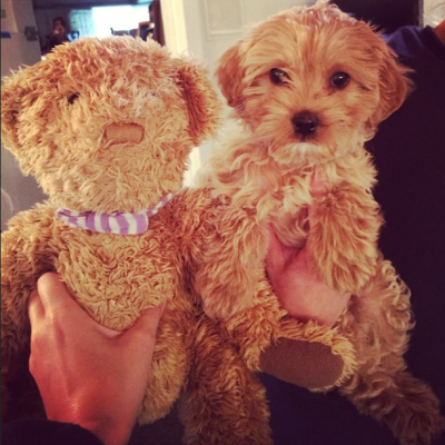 Katy Perry's Dog Butters with Teddy