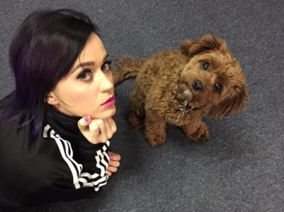 Katy Perry with dog Butters