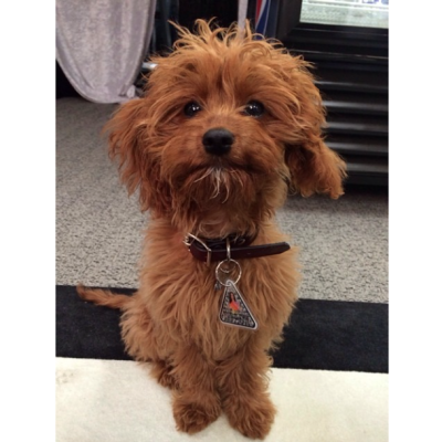 Butters, Katy Perry's Dog