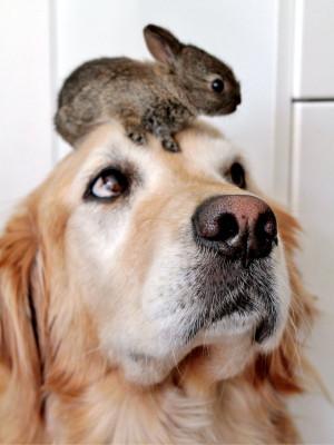 ab-dog-and-rabbit