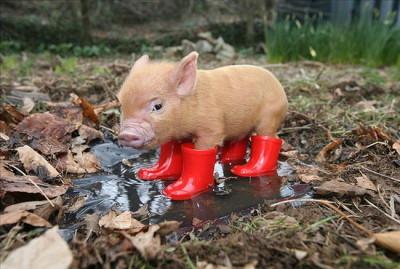 I love rain boots.
