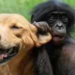 Help Out the Bonobos on World Wildlife Day!