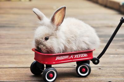 rabbit-cage