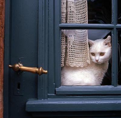 cat-dog-quiz-waits-at-door-127024691