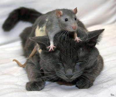 kat-and-mouse