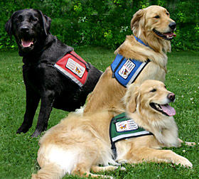 multiple-service-dogs