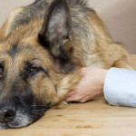Bow WOW! Canine Influenza Outbreak In The Midwest