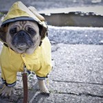 Need a Weather Update? Just Tune In to Your Pet!