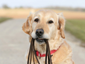 What Toxins Are Hurting Your Pets This Summer!