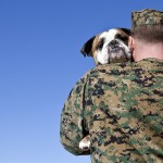 In Honor Of Memorial Day! Let's Support PACT's Military Foster Animal Program
