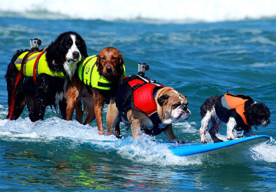 Who said Pups Can't Surf?